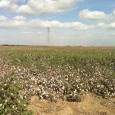 Approximately 120 acres of prime row crop farmland south of Bakersfield, CA
